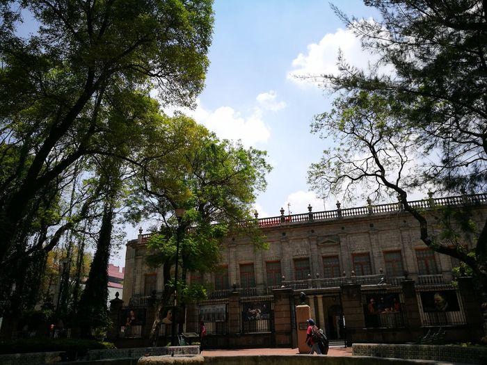 Mi México, mi arte y naturaleza. Arte_of_nature Museo San Carlos