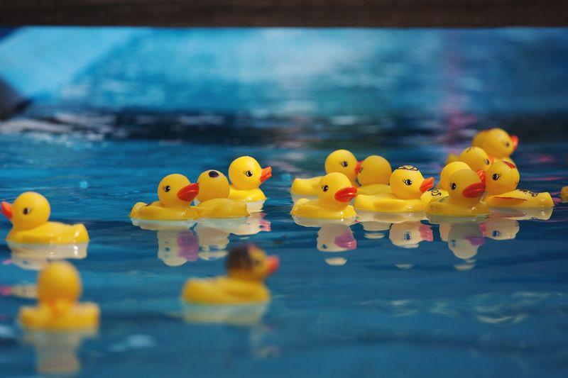 Yellow Plastic Ducks Floating On Water