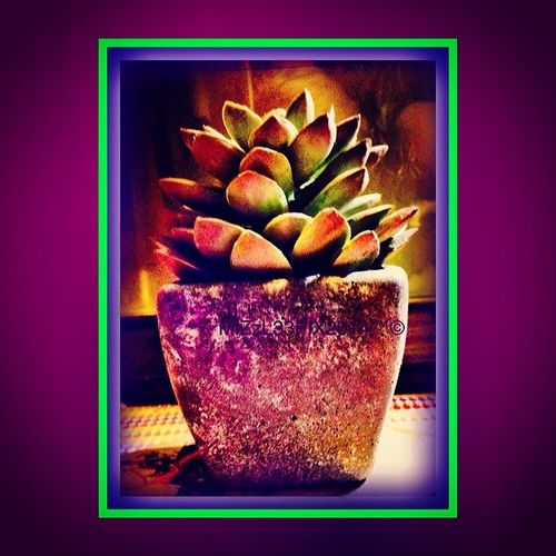 Plants not need, fear my dreaded black gardening thumb any longer! Yep it's plastic caucus folks! FTW Squaready Appedited Iphoneonly Multicoloured frame plastic deco cactus plant instagood nowaterneeded bright colourful cheerful immortal! rustic perfect looksreal! FTW!
