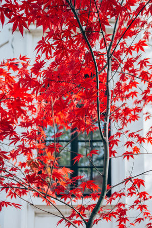 Autumn Nature Sunny Tree X100S Bokeh Cruceru Dead314XEL Fujifilm Leafes Urban Window