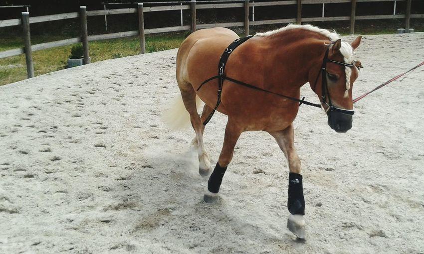 Mein kleines dickes pony