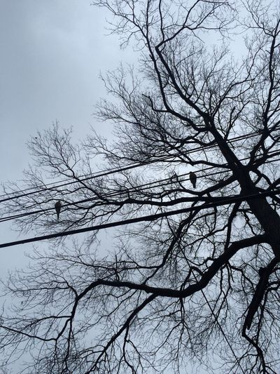 Two Birds Tree Cables Smile