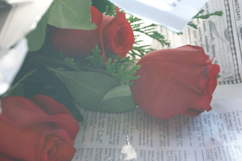 Day Flower Leaf Newspaper Newspaper Background Red Red Roses Rosé Three Roses