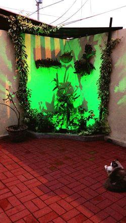 Mi rincón de Amor ❤ Mojo Gato Orquideas Bromelias Helechos VeranerasNopeople Plants Pets Animal Themes Domestic Animals One Animal Domestic Cat Growth Indoors