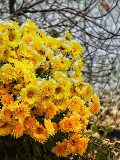 Flower Yellow Nature Beauty In Nature Growth Fragility Day Outdoors Close-up Plant No People Freshness Blooming Flower Head Animal Themes