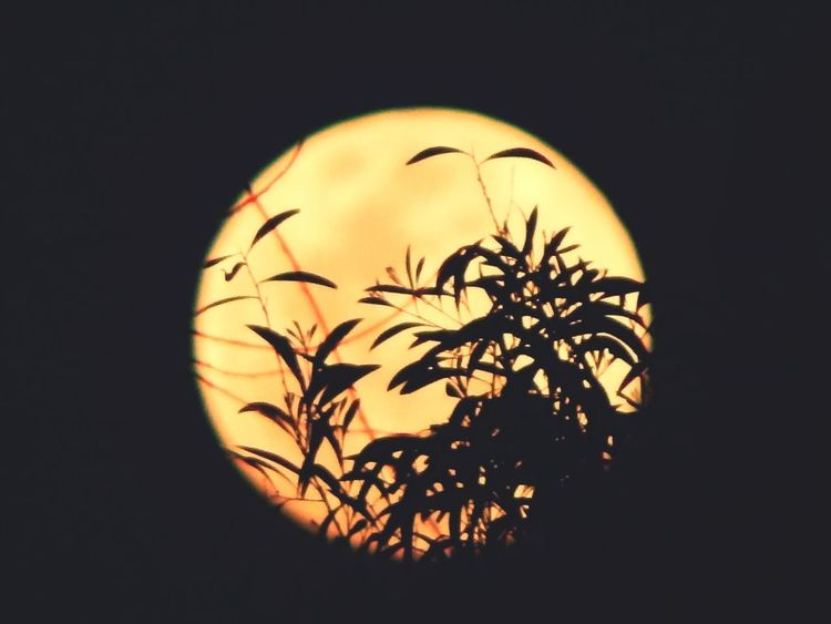 Colour of Moon 🌒 Vampire Warewolf Night Midnight Wolf WearWolf Yellow Yellow Yellowmoon Silhouette Bird Astronomy Close-up Full Moon Moon Sky Only Eclipse Moon Surface Moonlight Sunset Solar System Planetary Moon Solar Eclipse Astrology Dissolving Crescent Space Exploration Surreal Mysterious Half Moon First Eyeem Photo EyeEmNewHere