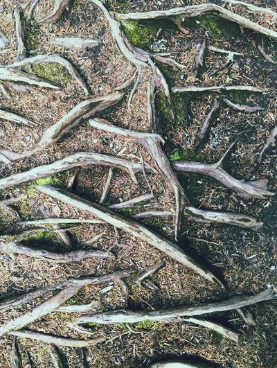 Abstract Nature Roots Of Tree Roots Shapes In Nature  Abstractions Landscape Landscape #Nature #photography Nature Photography Perspective Earth Porn Texture Views Mt.hood Roots Of Life Textured  Tree Porn Patterns In Nature Nature Patterns & Textures Textures And Surfaces Landscape Photography