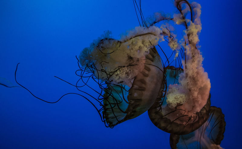 UnderSea Blue Human Hand Close-up Sky Jellyfish Tentacle Aquarium Underwater Sea Life Invertebrate Floating In Water