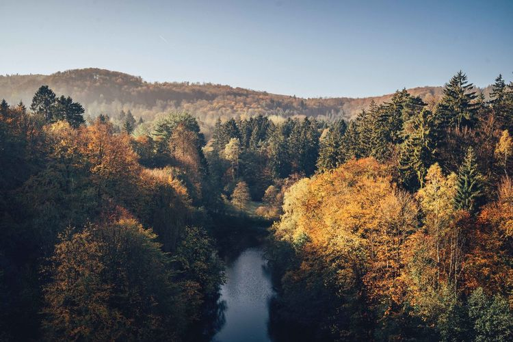 Scenic view of river amidst trees against clear sky in autumn