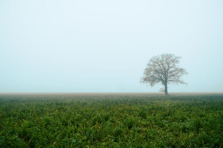 My Best Photo Fog Tree Environment Plant Landscape Tranquility Land Tranquil Scene Scenics - Nature Beauty In Nature Nature No People Non-urban Scene Field Sky Horizon Horizon Over Land Growth Outdoors Isolated