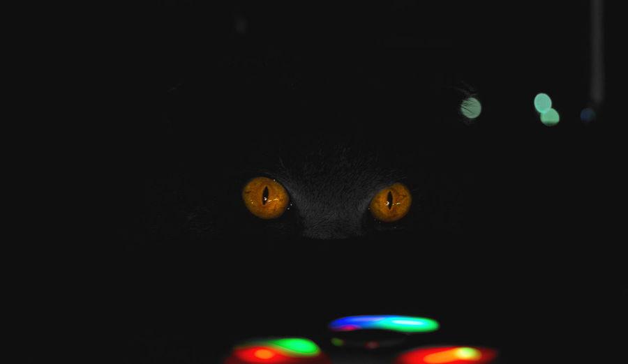 Colour version Animal Night Animal Themes Illuminated Mammal No People One Animal Portrait Indoors  Vertebrate Close-up Cat Dark Domestic Animals Feline Domestic Cat Pets Black Background Animal Eye Animal Head  Domestic Animal Body Part Eyes In Darkness Eyes Light View