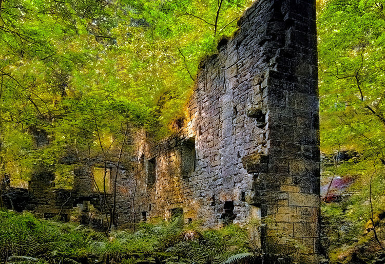 old ruined stone building in vibrant green woodland Fernsehturm Ruins Abandoned Architecture Beauty In Nature Built Structure Day Ferns Forest Green Color History Nature Old Outdoors The Past Tranquility Tree Vibrant Color Wall - Building Feature