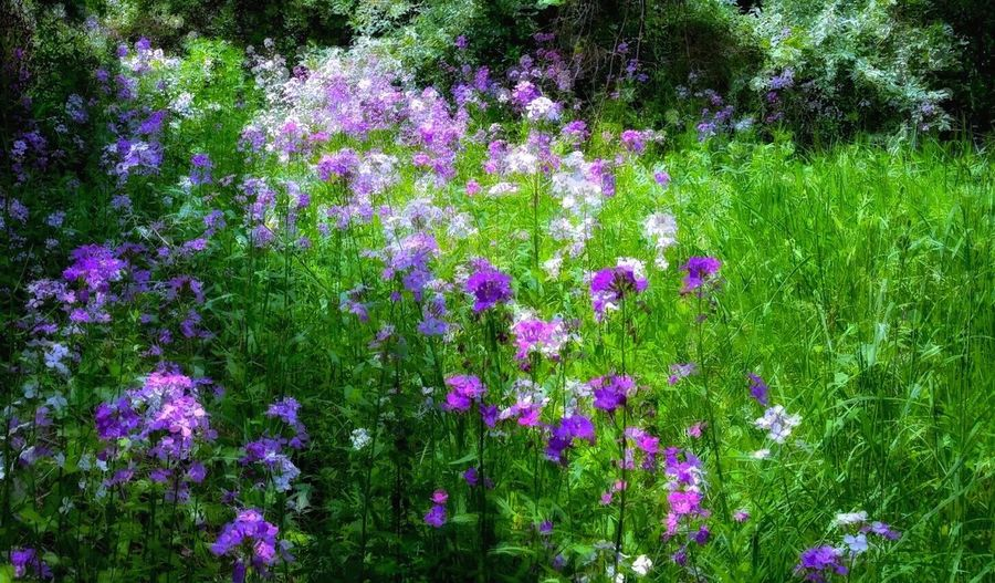 Purple Flower White Flower Field Of Flowers Green Nature Green Grass 🌱 Trees And Bushes