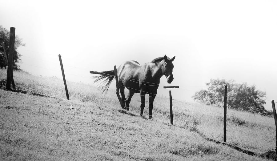 TGI Fence Post Friday Streamzoofamily NEM Landscapes NEM Black&white