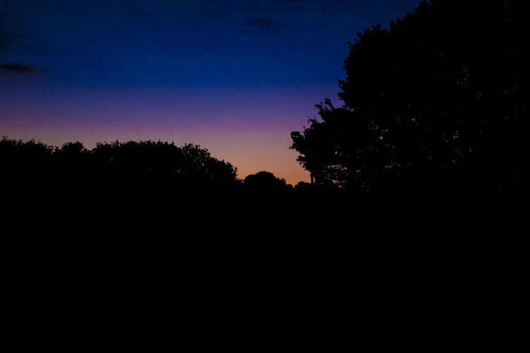 Silhouette of trees against sky at night