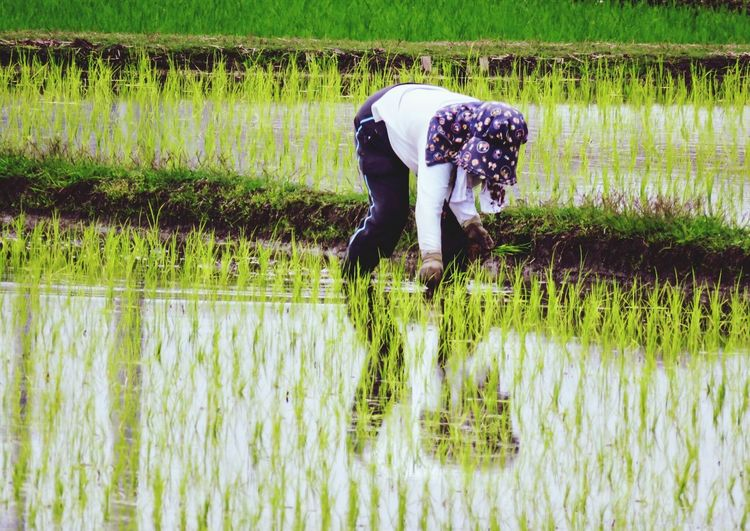 Farmer working in farm