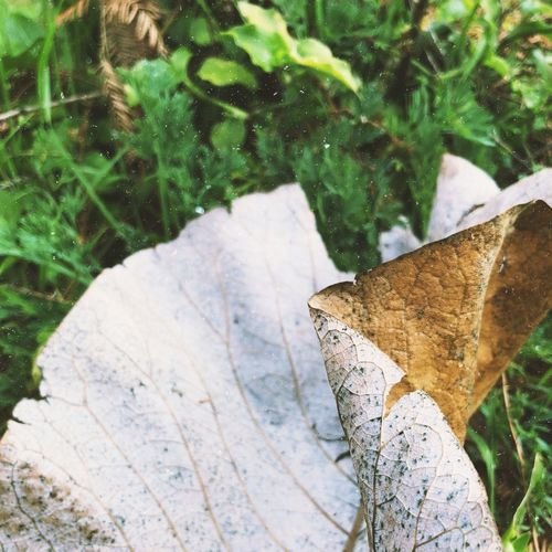 Leaf Nature Change Day Outdoors Autumn Plant AI Now