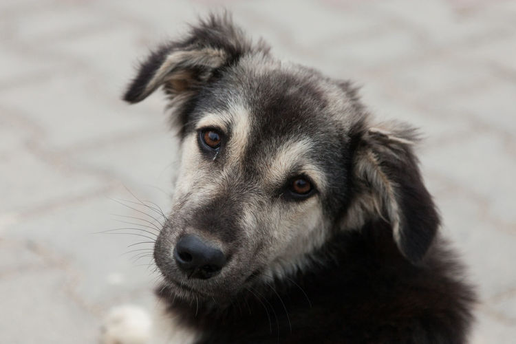 street dog puppy looks at the camera Animal Themes Close-up Day Dog Domestic Animals Looking At Camera Mammal No People One Animal Outdoors Portrait Puppy Triliye Turkey