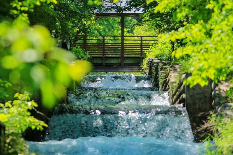 Green Green Color Green Nature Green Green Green!  Copy Space Backgrounds Japan Plant Architecture Water Nature Green Color Built Structure No People Growth Tree Day Staircase Outdoors Direction Beauty In Nature Building Exterior The Way Forward Motion Sunlight Park Flowing Water