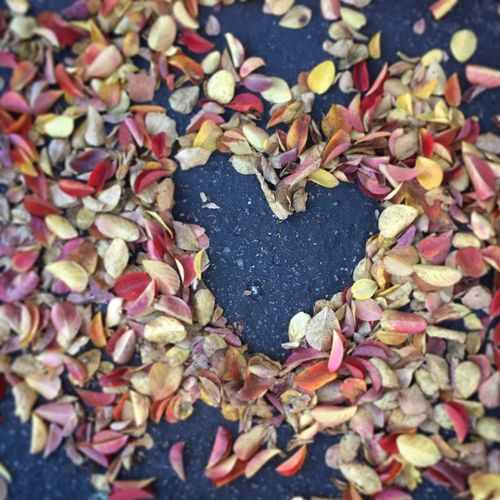 High angle view of dry leaves on heart shape during autumn