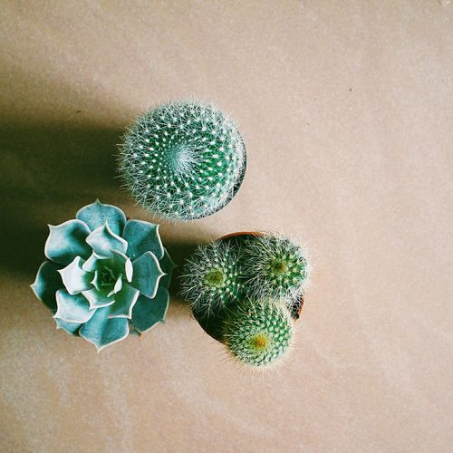 High angle view of cactus plants