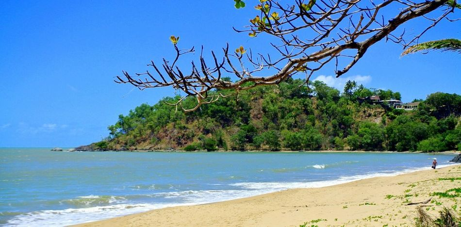 Beach Sea Sand Tree Nature Water Tropical Climate Beauty In Nature Scenics Sunny Tranquil Scene Tranquility Travel Destinations Blue Vacations Outdoors Landscape Clear Sky Summer Day Cairns, North Queensland, Australia