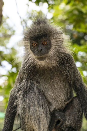 Portrait of monkey sitting on a tree