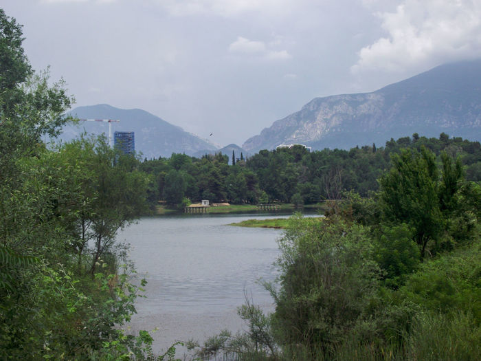 Artificial Lake Of Tirana Mountain Range Mountains And Valleys Lake View Lakeshore Countryside Pine Tree Pine Woodland Lush - Description Wilderness Evergreen Tree Eastern Europe Pine Wood Needle - Plant Part Foggy