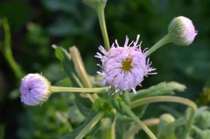 今日も、こんなふうにいっぱい両手を広げて〜がんばった〜ヽ(≧▽≦)ノいつか、ゆっくり幸せに成りたい〜 花 草花