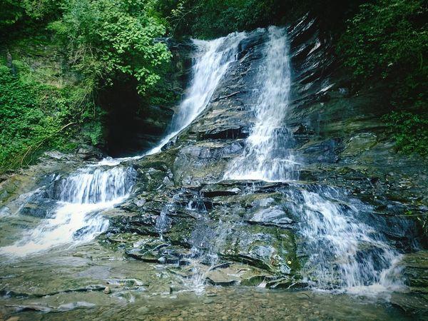 養老渓谷 Yōrō Keikoku Tree Trip Trip Photo Japanese  Enjoying Life River Water お出掛け Japanese  Riverside Waterfall Forest Green Color Day Beauty In Nature