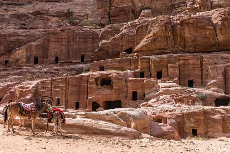 Desert Petra Jordan Rock Formation Donkey History Rocks Tombs Travel Destinations