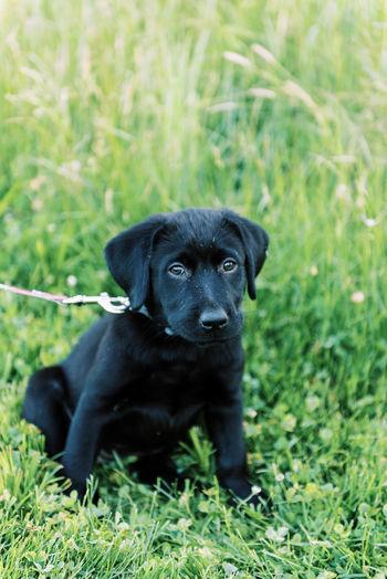 Portrait of black dog sitting on grass