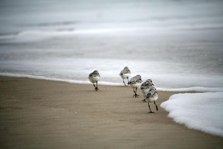 Run Run Run ! EyeEmNewHere Nature Beach Birds No People Outdoors Sand Sandpiper