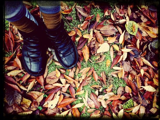 足元の秋。