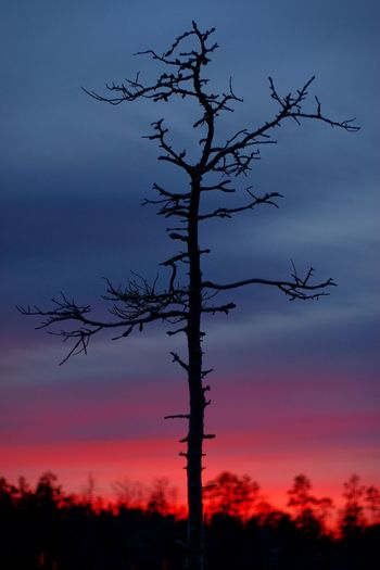 Silhouette of a lonely tree Lonely Tree Colorful Sky Minimalobsession Lessismore Peaceful Treetops Showcase: December Light Red Sky Blue Hour Horizon Loneliness Eternity Winterscapes Winter Sky Towards The Light Burning Sky Clouds And Sky Tree Colors Old Tree Silhouette Edited On IOS Pentax