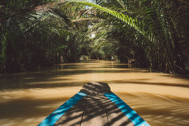 Mekong Mekong Delta Mekong River Tiền Giang, Vietnam Vietnam Beauty In Nature Blurred Motion Day Direction Forest Growth Land Motion Nature No People Outdoors Palm Tree Plant The Way Forward Tranquility Transportation Tree Tropical Climate Water It's About The Journey