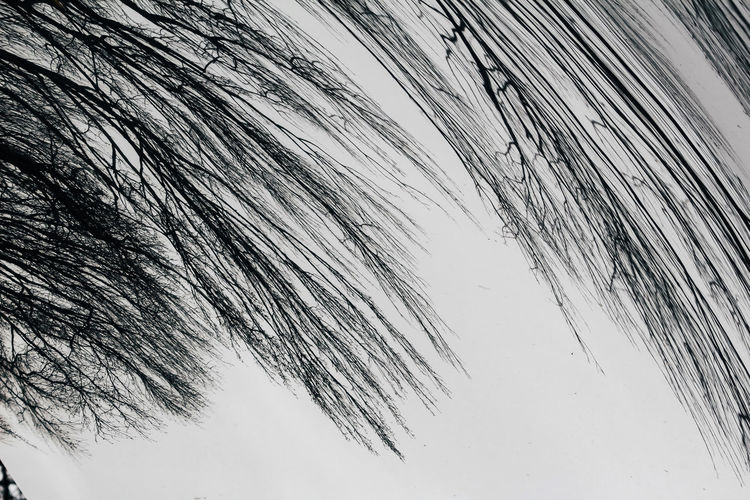 No People Tranquility Plant Nature Day Low Angle View Beauty In Nature Tree Sky Growth Winter Outdoors Cold Temperature Tranquil Scene Close-up Snow Frozen Scenics - Nature Grass Mirror Reflection Inverted Distortion