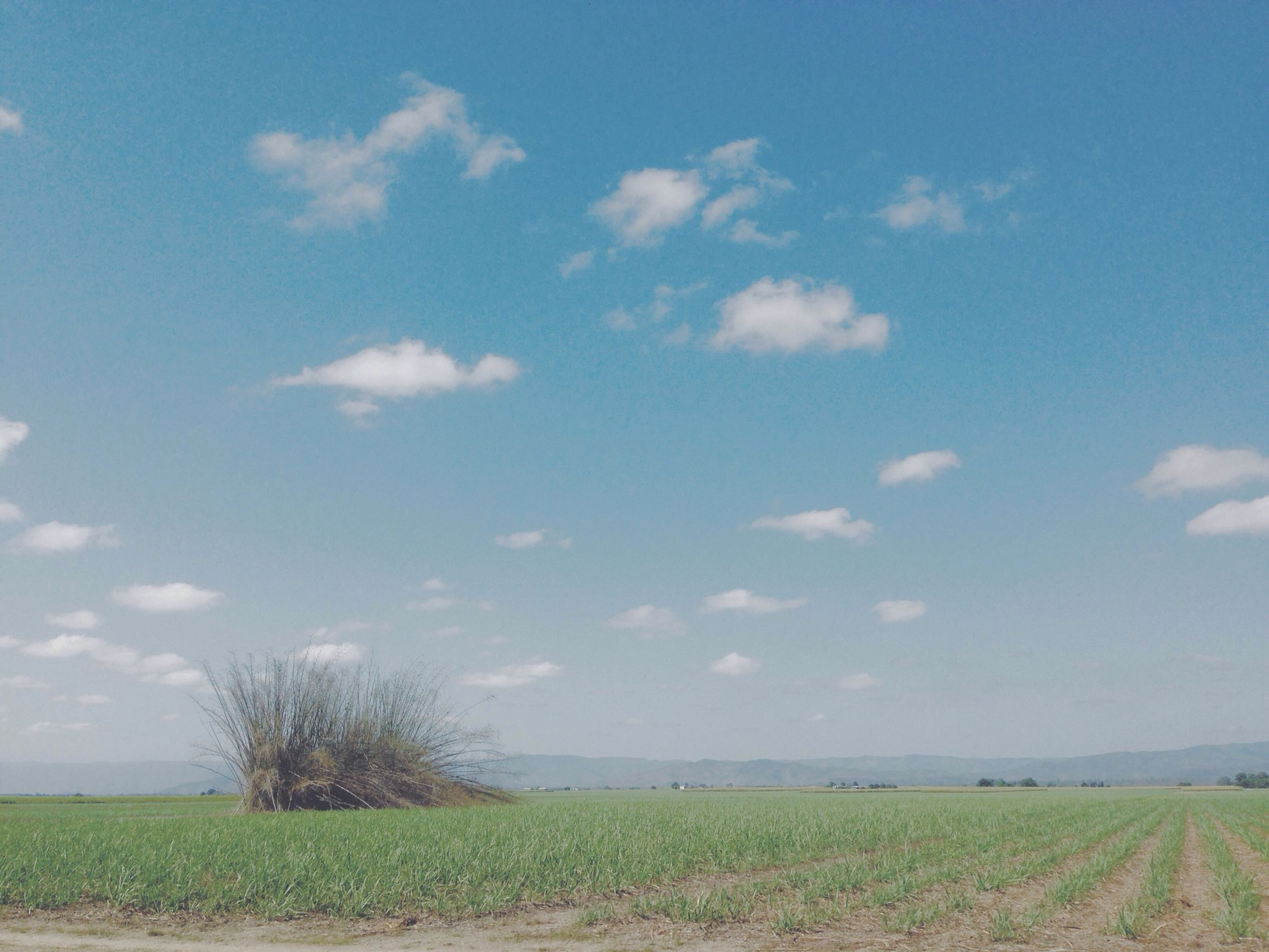 tranquil scene, tranquility, sky, field, landscape, grass, scenics, beauty in nature, nature, rural scene, growth, agriculture, blue, horizon over land, cloud, cloud - sky, plant, idyllic, water, remote