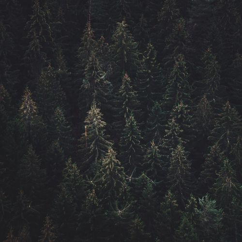 Forest Trees Moody Looking Down Forest Drone Shot Patterns Everywhere Pattern, Texture, Shape And Form Patterns In Nature Full Frame Backgrounds No People Plant Nature Tree Night Pattern Beauty In Nature Growth Tranquility Outdoors Winter Cold Temperature Green Color Coniferous Tree Textured