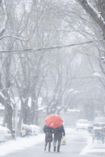 天地一场大雪,何不煮茶空谈,大家都已上班,料是不得清闲。 snow Winter Snow Snowing Tree Walking Outdoors Street Two People