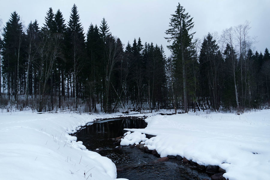 SOGNSVANN 1/3 Sognsvann Oslo Norway Europe Trees Snow Winter Stream Landscape Outdoors