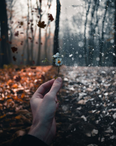 Autumn and winter in one composite Human Hand Hand Human Body Part Holding Real People Tree One Person Personal Perspective Nature Lifestyles Winter Autumn Falling Leaves Snow Falling Snow