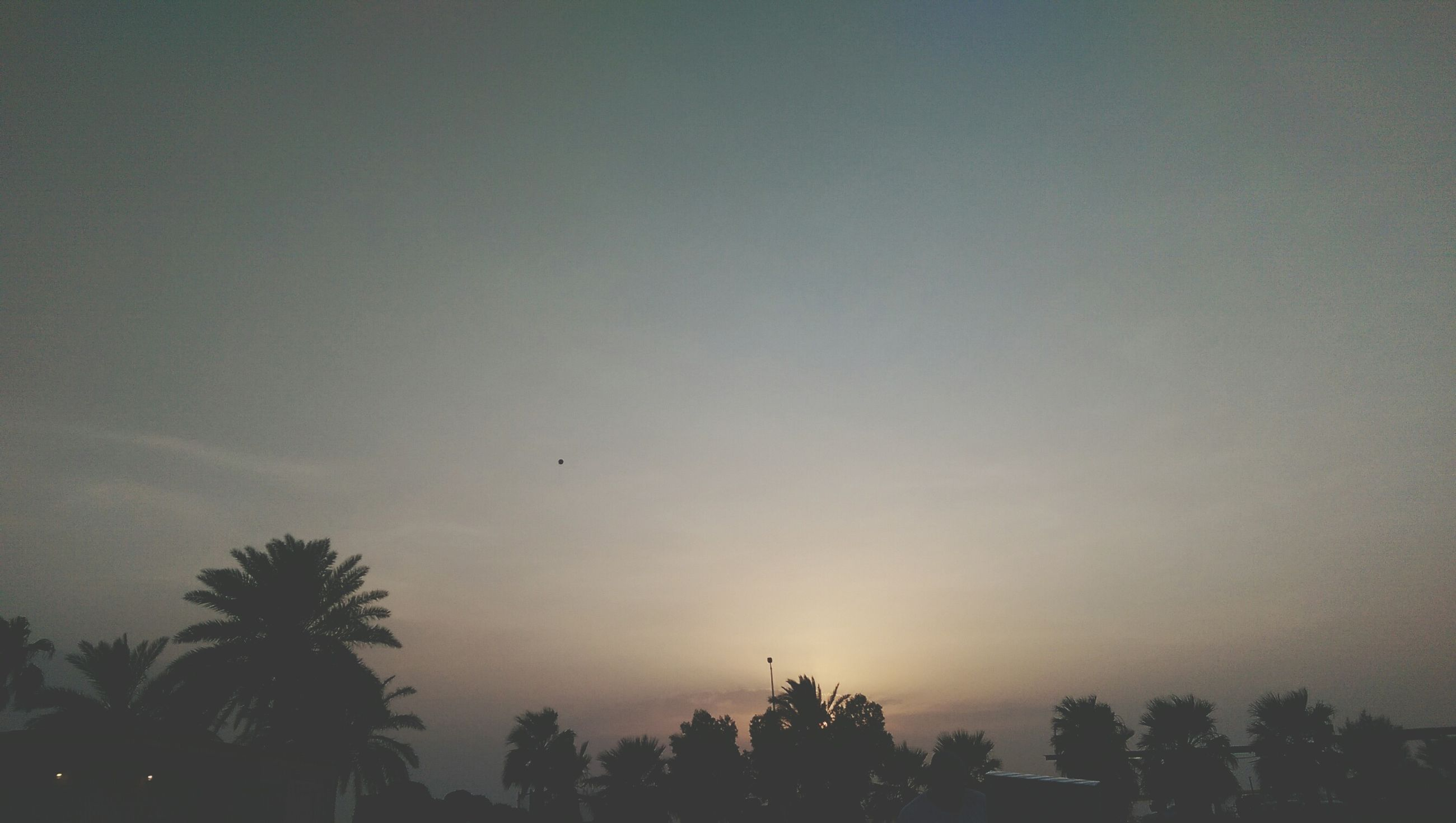 silhouette, tree, sunset, sky, low angle view, bird, flying, nature, beauty in nature, copy space, tranquility, dusk, scenics, tranquil scene, palm tree, growth, clear sky, outdoors, no people, outline