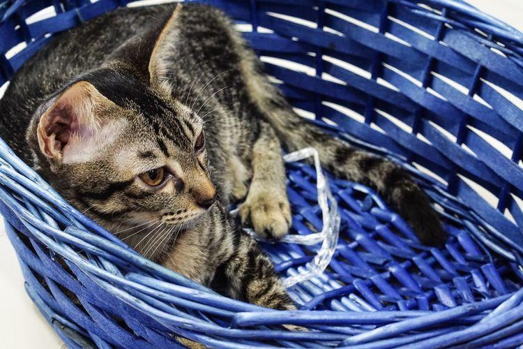 Close-up of animal sleeping in basket