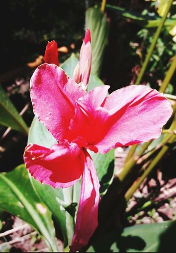 ดอกไม้สีแดง Flower Red Nature Petal Beauty In Nature Flower Head Growth Plant Fragility Focus On Foreground Pink Color Outdoors Close-up Freshness Rhododendron Vertical Pollen Orchid Leaf Day