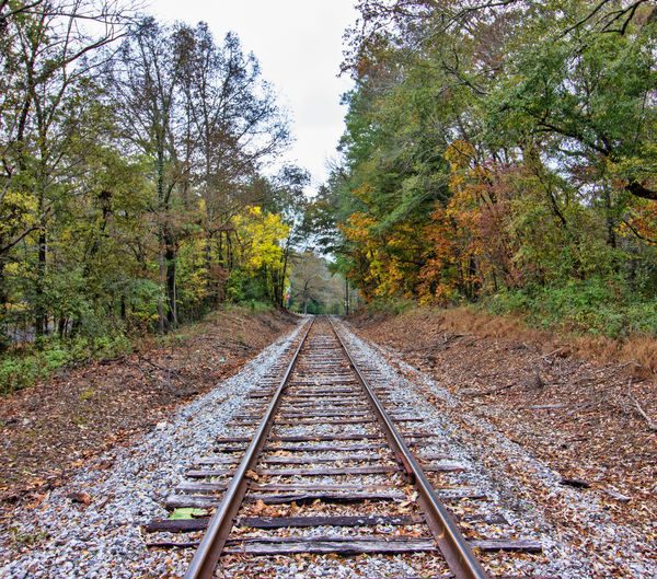 Down the Tracks Tree Rail Transportation Railroad Track Track Direction The Way Forward Diminishing Perspective Nature Growth Day No People Autumn