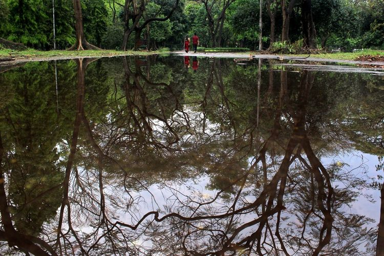 Reflection Water Tree Plant Tranquility Waterfront Tranquil Scene Forest Beauty In Nature Nature Scenics - Nature Growth Land Outdoors Real People Park Urban Urban Park City Couple