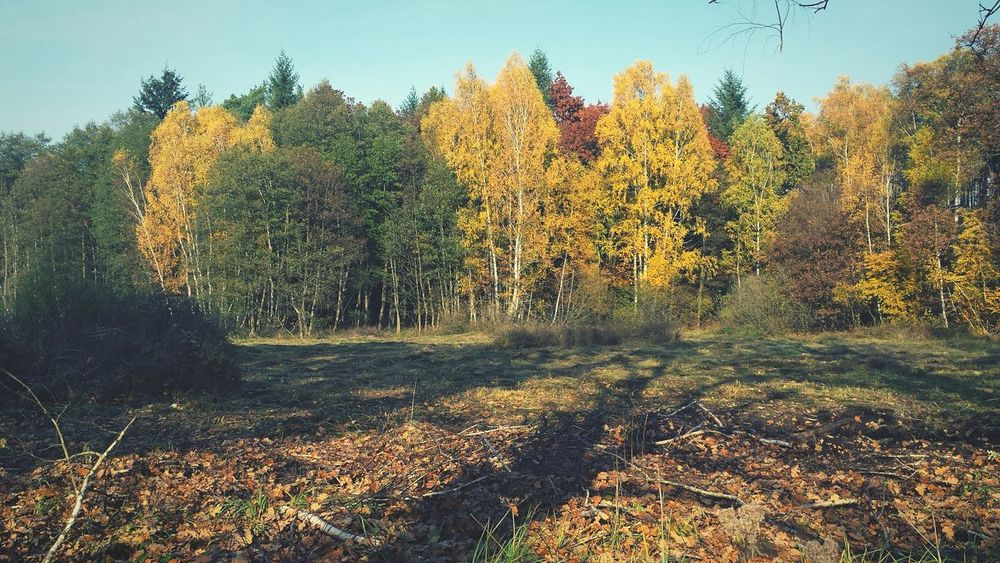 Autumn Colors Autumn Nature_collection Forest Photo Yellow Autumn Nature Beatyful Nature Lover