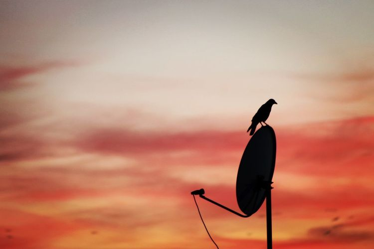 Low angle view of silhouette bird perching on pole against sky