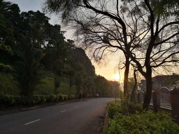 Road amidst trees in city against sky at sunset